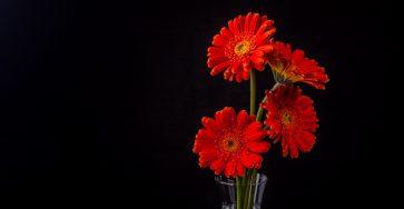Lempar Bunga